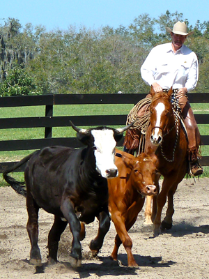 Pat Parelli on Troubadour at the Ocala, Florida campus